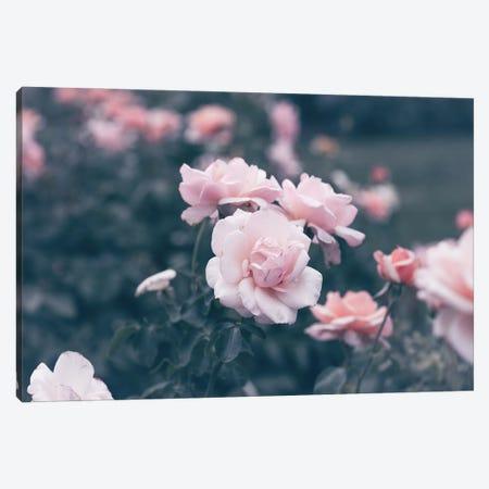 Romantic Pink Poses Canvas Print #AHD214} by Ann Hudec Canvas Artwork