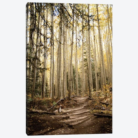 Autumn Light In The Aspen Grove Rustic Decor Canvas Print #AHD225} by Ann Hudec Canvas Art Print