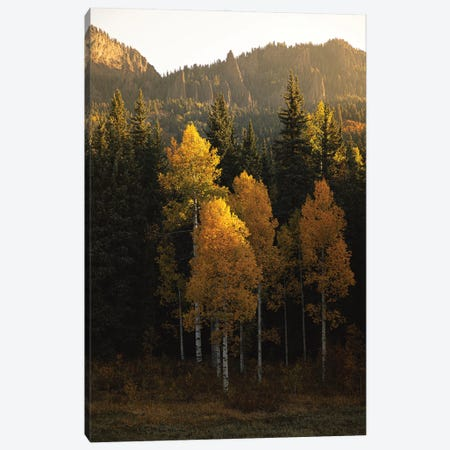 Aspen Gold Autumn In Colorado Canvas Print #AHD231} by Ann Hudec Canvas Art Print