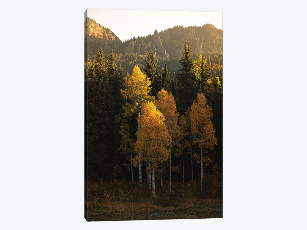 Aspen Gold Autumn In Colorado by Ann Hudec 1-piece Canvas Art Print