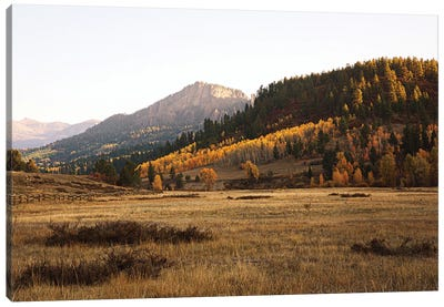 Colorful Colorado Autumn In The Mountains II Canvas Art Print