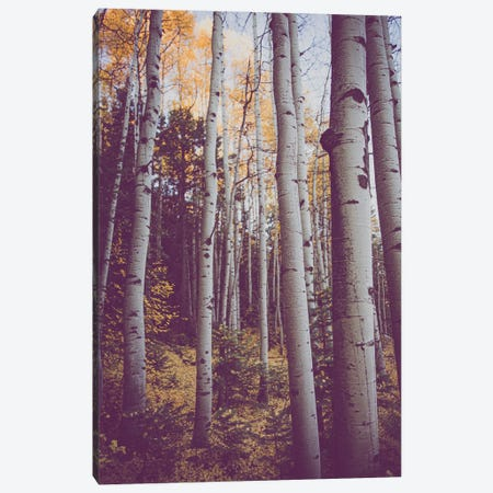 Autumn Aspens Canvas Print #AHD235} by Ann Hudec Canvas Wall Art