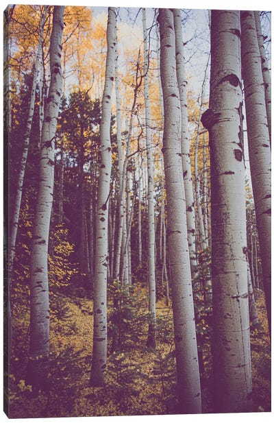 Autumn Aspens Canvas Art Print