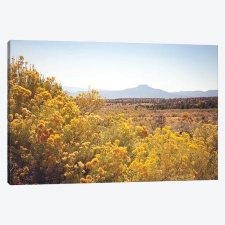 New Mexico Gold Canvas Print #AHD242} by Ann Hudec Canvas Art