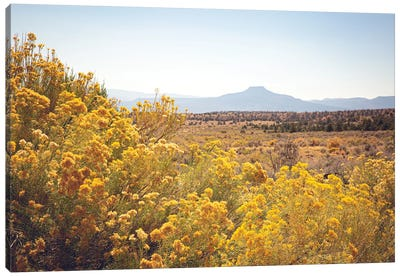 New Mexico Gold Canvas Art Print