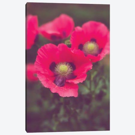 Electric Pink Poppies Floral Art Canvas Print #AHD246} by Ann Hudec Art Print
