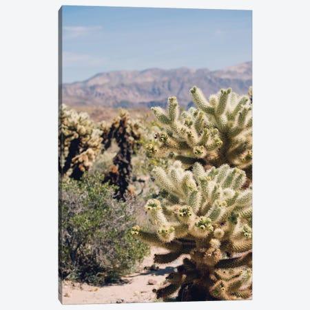 Cholloa Cactus Garden Canvas Print #AHD24} by Ann Hudec Art Print