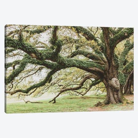 New Orleans Audubon Park I Canvas Print #AHD269} by Ann Hudec Canvas Art