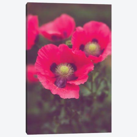 Pink Poppies Floral Art Canvas Print #AHD273} by Ann Hudec Canvas Print