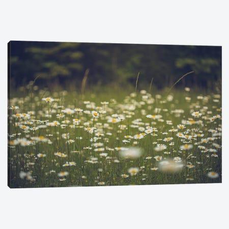Field Of Daisies Wildflower Art Canvas Print #AHD276} by Ann Hudec Canvas Artwork