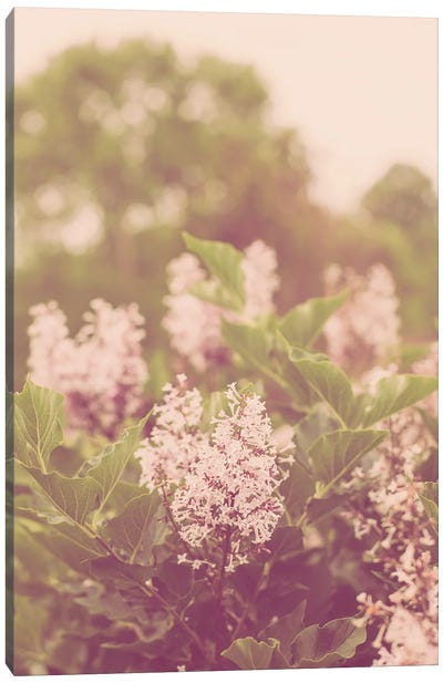 Spring Lilac Blooms II Canvas Art Print