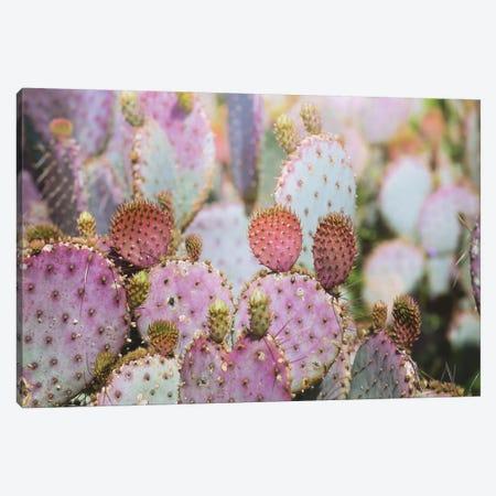 Cotton Candy Cacti Canvas Print #AHD30} by Ann Hudec Canvas Art Print