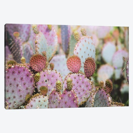 Cotton Candy Cacti Canvas Print #AHD30} by Ann Hudec Canvas Art Print