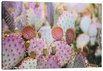Cotton Candy Cacti Canvas Art Print