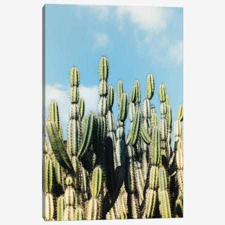 Desert Garden Canvas Print #AHD36} by Ann Hudec Canvas Wall Art