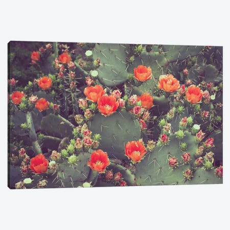 Desert Rose Canvas Print #AHD44} by Ann Hudec Canvas Print