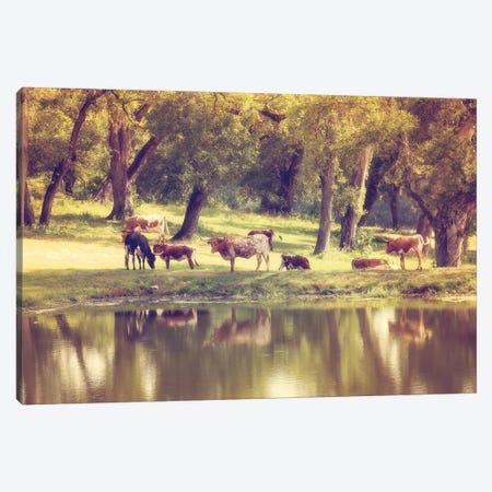 Hillcountry Afternoon Canvas Print #AHD64} by Ann Hudec Canvas Print