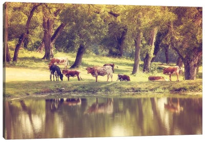 Hillcountry Afternoon Canvas Art Print