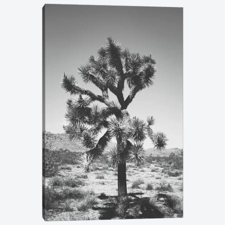 Joshua Tree I Canvas Print #AHD68} by Ann Hudec Canvas Wall Art
