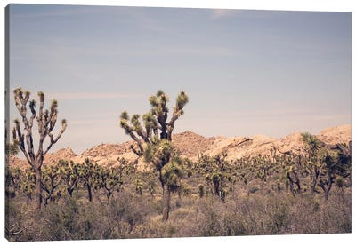 Joshua Tree III Canvas Art Print