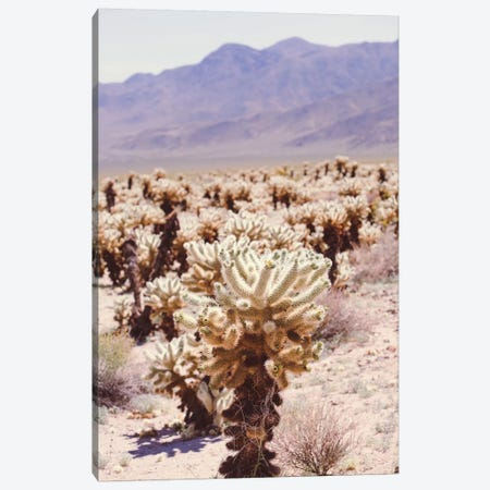 Joshua Tree IV Canvas Print #AHD71} by Ann Hudec Canvas Art Print