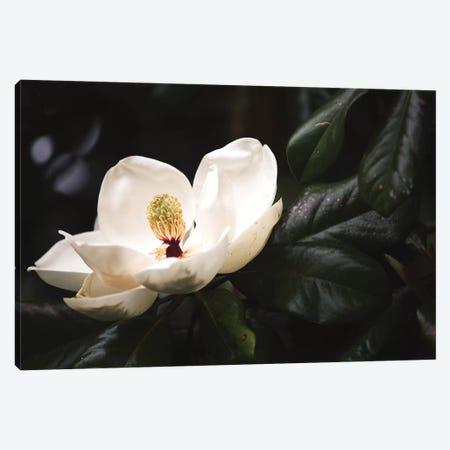 Magnolia I Canvas Print #AHD83} by Ann Hudec Canvas Art