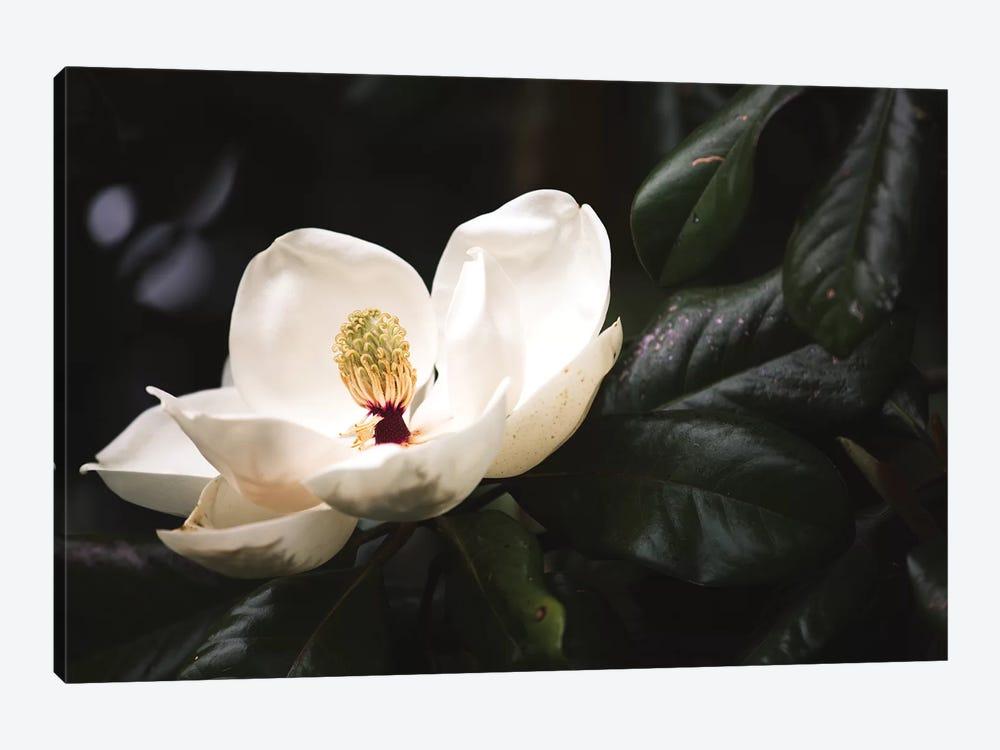 Magnolia I by Ann Hudec 1-piece Canvas Print