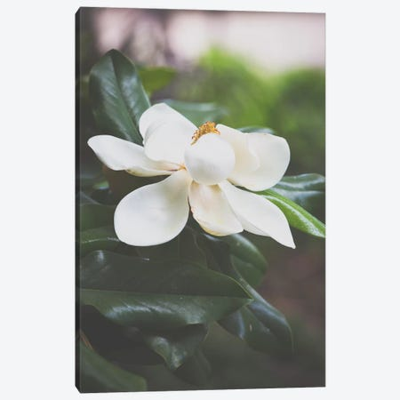 Magnolia II Canvas Print #AHD84} by Ann Hudec Canvas Print