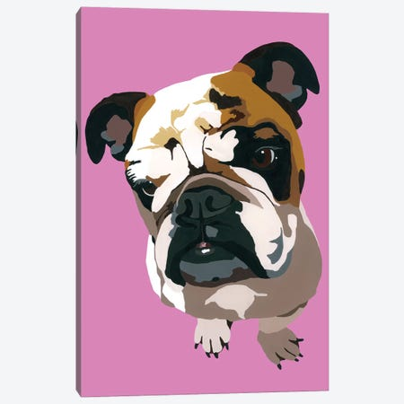 Bulldog On Pink Canvas Print #AHM55} by Julie Ahmad Canvas Art Print