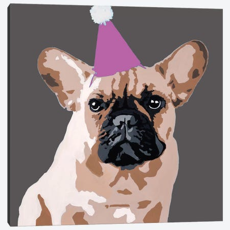 Milo On Dark Gray With A Pink Party Hat Canvas Print #AHM73} by Julie Ahmad Canvas Artwork