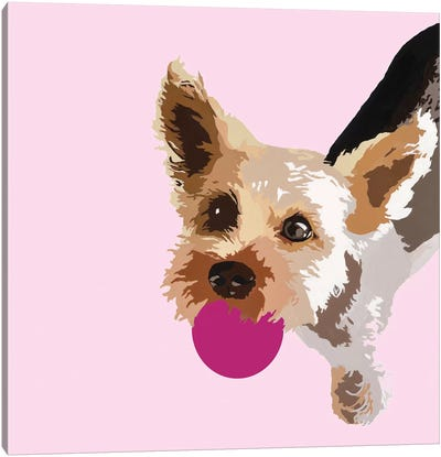 Rex On Pink Canvas Art Print