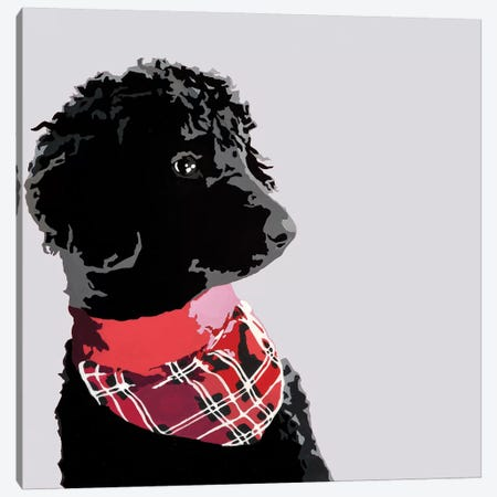 Standard Black Poodle II Canvas Print #AHM85} by Julie Ahmad Canvas Artwork
