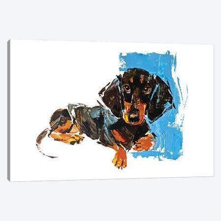 Dachshund Canvas Print #AHZ6} by Anna Cher Canvas Art