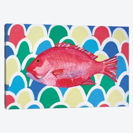 Red Snapper Canvas Print #AIE32} by Alice Straker Canvas Print
