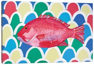 Red Snapper Canvas Art Print