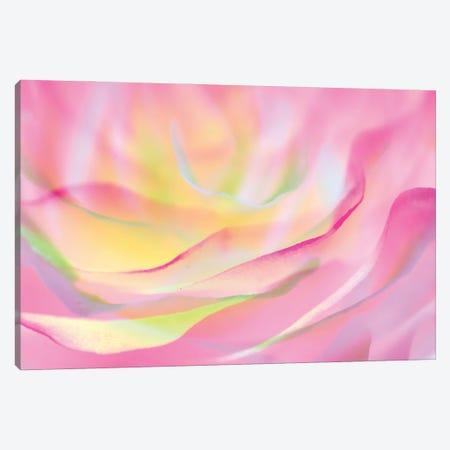 Essence of Rose VI Canvas Print #AII34} by amini54 Canvas Artwork