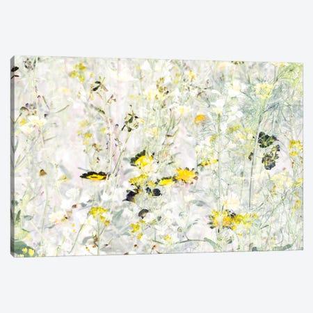 Wild Flowers VIII Canvas Print #AII3} by amini54 Canvas Art