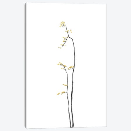 Minimal Botanical - Bonsai Tree I Canvas Print #AII48} by amini54 Canvas Wall Art