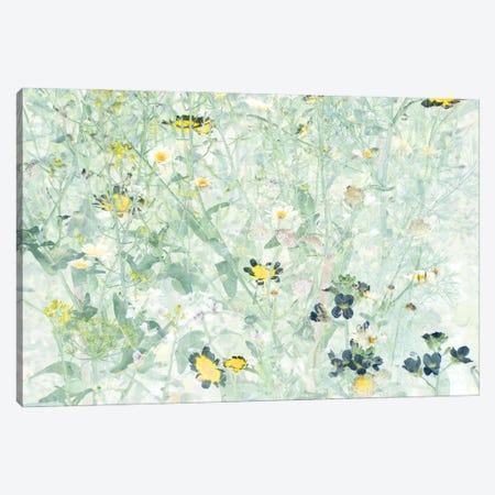 Wild Flowers V Canvas Print #AII4} by amini54 Canvas Print