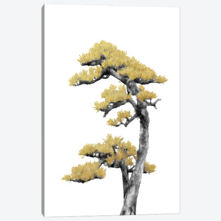 Minimal Botanical - Bonsai Tree IV Canvas Print #AII50} by amini54 Canvas Print
