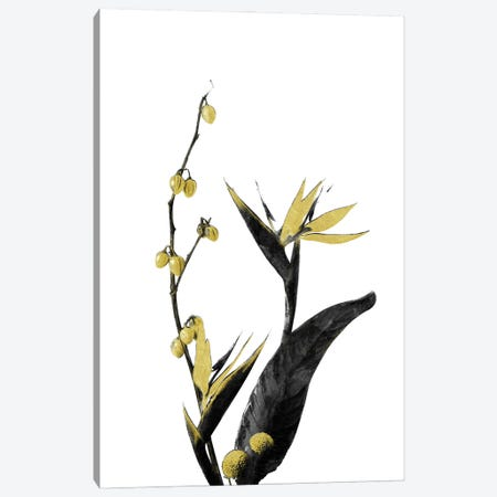 Minimal Botanical - Flower Minimal Black and Gold II Canvas Print #AII53} by amini54 Canvas Print