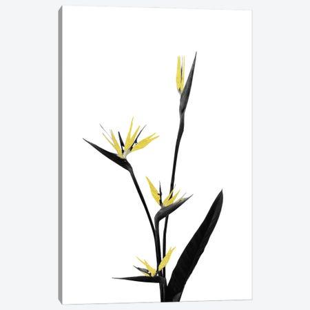 Minimal Botanical - Flower Minimal Black and Gold V Canvas Print #AII56} by amini54 Canvas Art