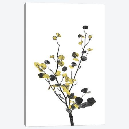 Minimal Botanical - Flower Minimal Black and Gold VII Canvas Print #AII57} by amini54 Canvas Artwork