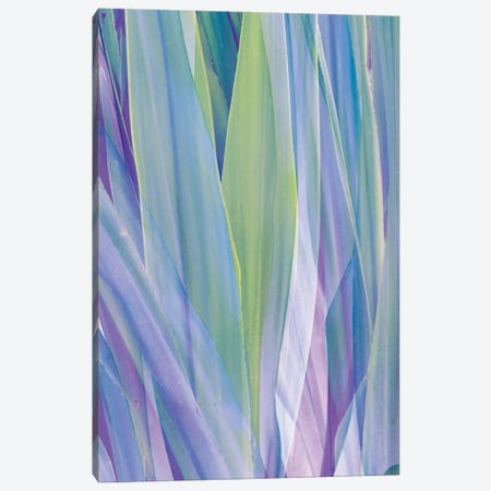 Violet and Green Palm Leaves Abstraction Canvas Print #AII5} by amini54 Canvas Print