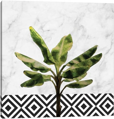 Banana Plant on White Marble and Checker Canvas Art Print