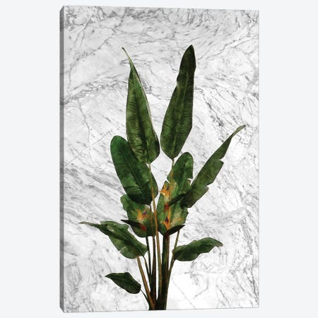 Bird of Paradise Plant on White Marble Canvas Print #AII80} by amini54 Canvas Wall Art