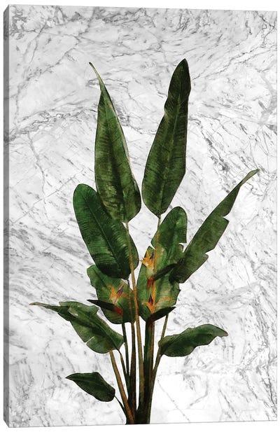 Bird of Paradise Plant on White Marble Canvas Art Print