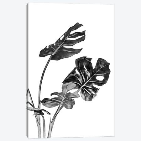 Monstera Black and White II Canvas Print #AII84} by amini54 Canvas Art Print
