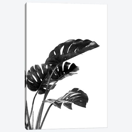 Monstera Black and White III Canvas Print #AII85} by amini54 Art Print
