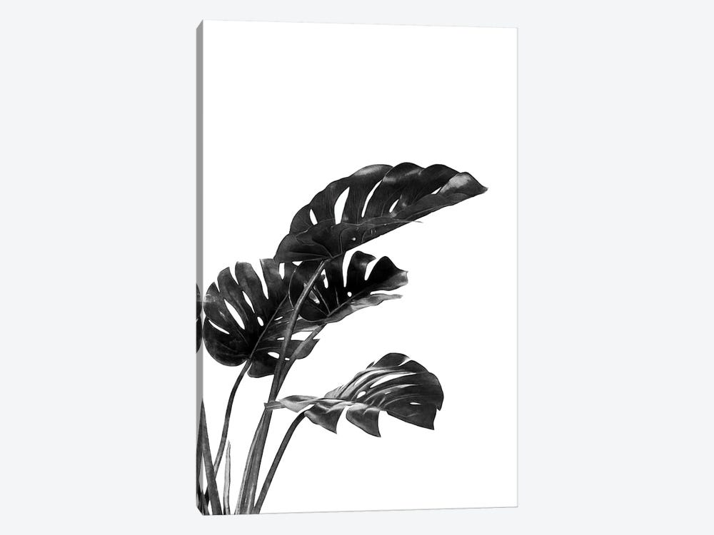 Monstera Black and White III by amini54 1-piece Canvas Art